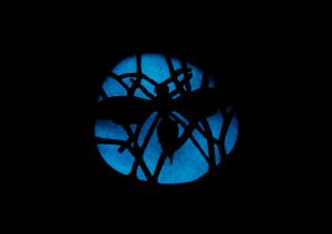 blue wasp brooch glow_2014